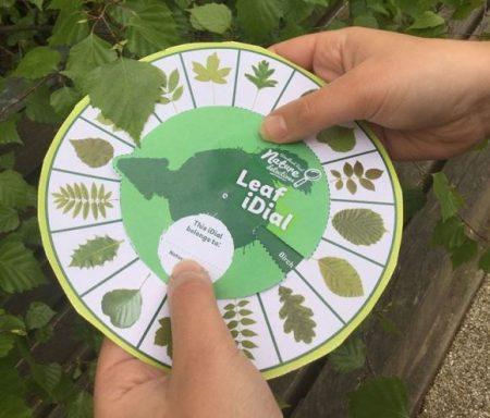 nature detectives leaf dial