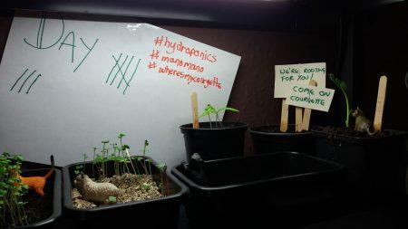 hydrponics unit